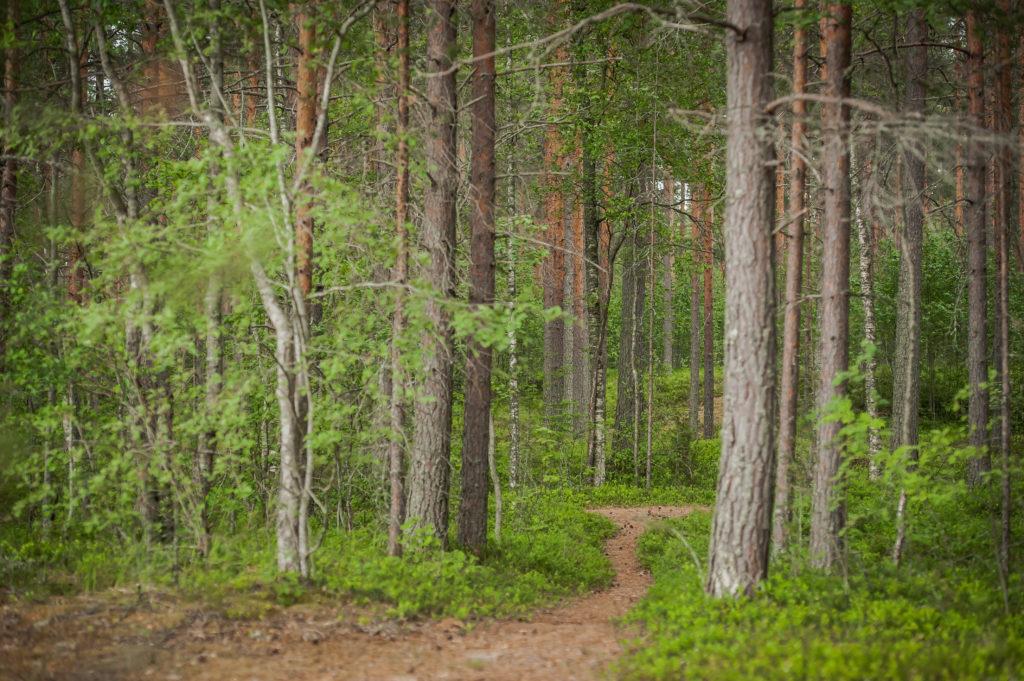 Polku joka johdattaa vihreään metsään.